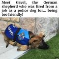 Poor dogo
