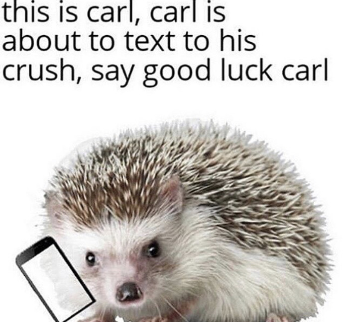 Good luck Carl - meme