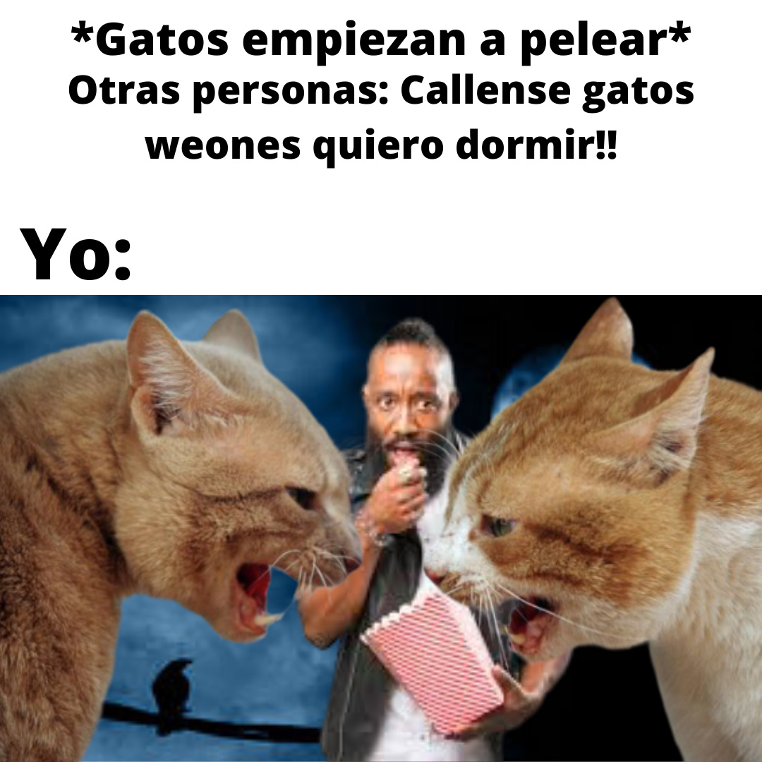peleas de gatos - meme