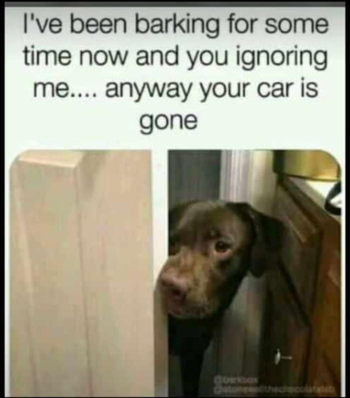 listen to yo doggie - meme