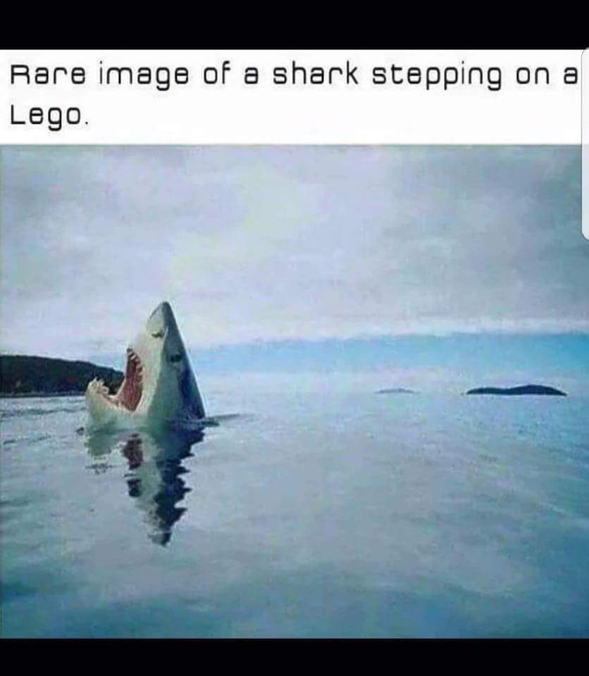 Poor shark - meme