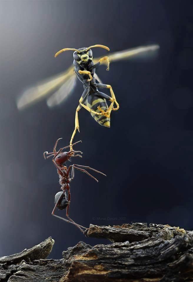 Escenas ineditas de Ant Man and Wasp - meme