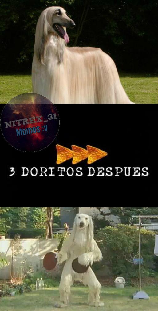 Consome Panchi Con 3 Doritos :v - meme