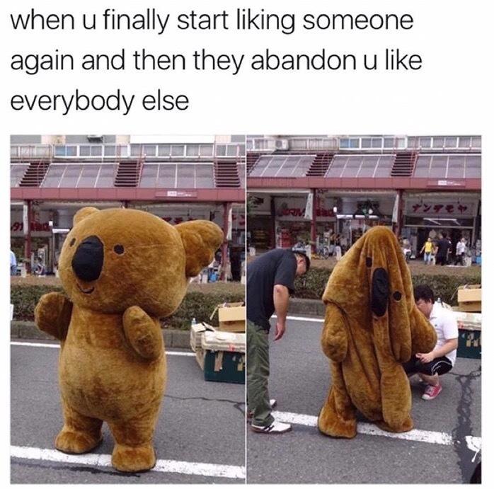 Depressed bear - meme