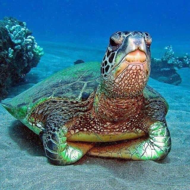 Most judgmental turtle ever - meme
