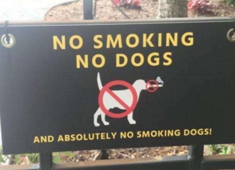 No no smoking dogs - meme