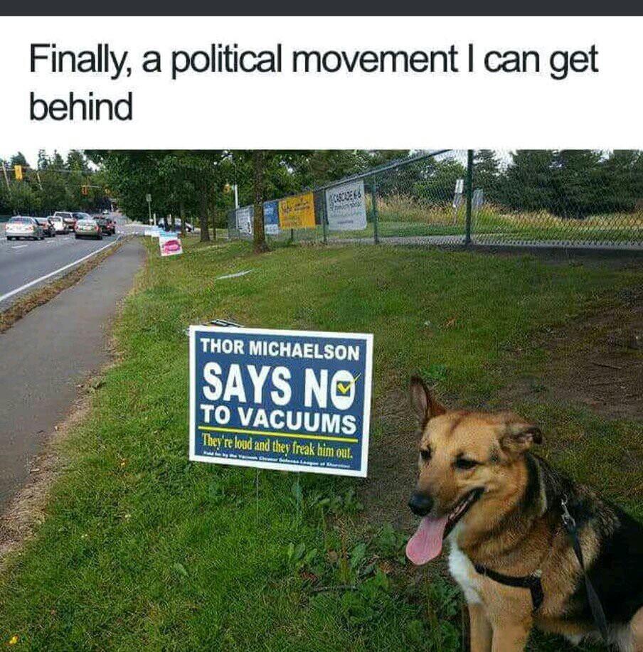 Thats my dog - meme