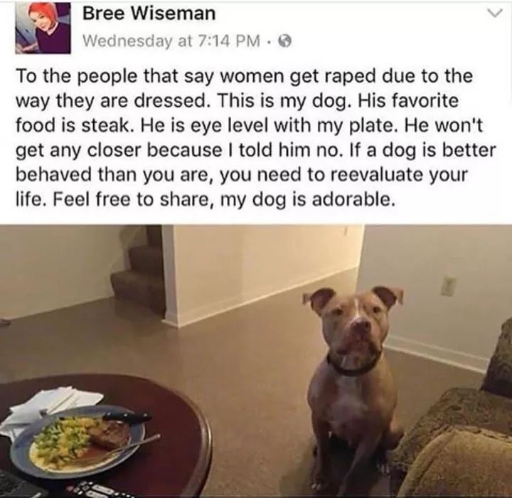Why having a dog can be better then having a man around sometimes - meme