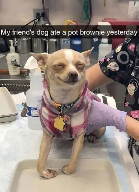 I want some of dat brownies - meme