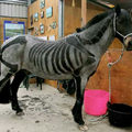 Spooky-horse