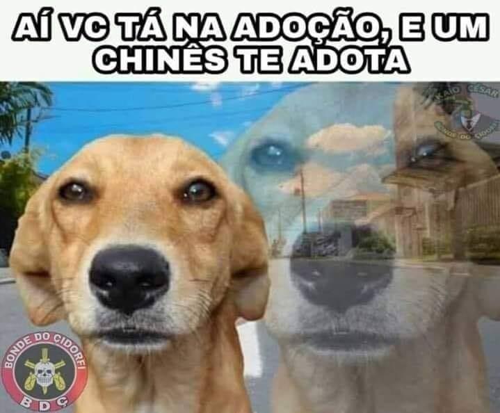 Saddog - meme