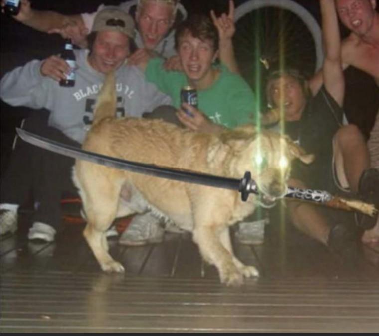 Cachorro ninja gaiden foudasi - meme
