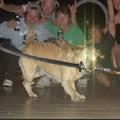 Cachorro ninja gaiden foudasi