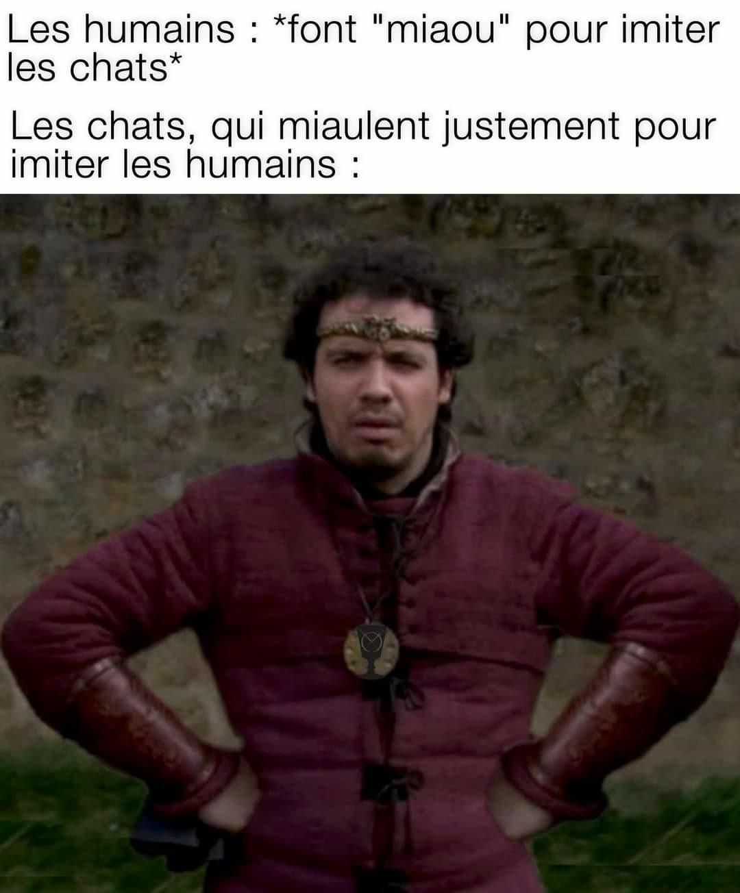 Wouaf - meme