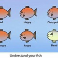 A guide to fish