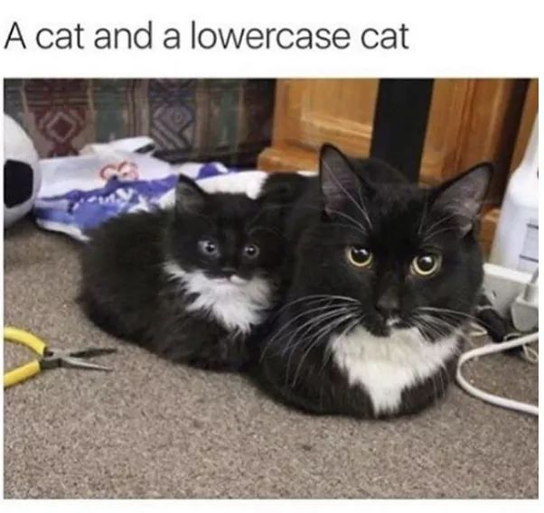 Cat - meme