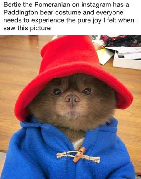 *pets. dog too* - meme