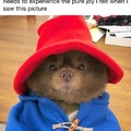 *pets. dog too*