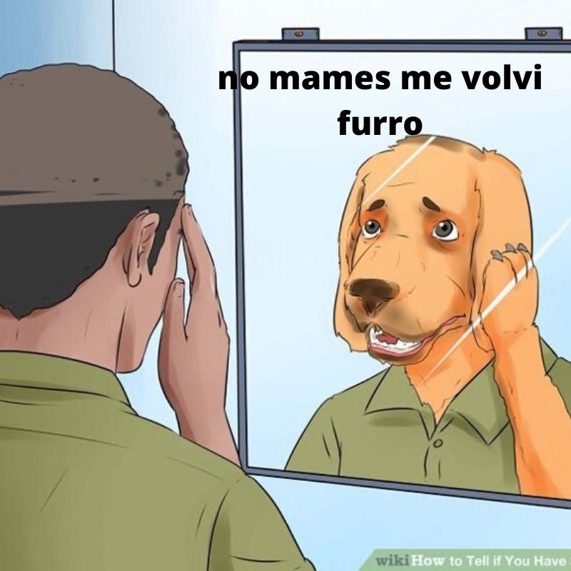 los pnches furros                                                      -el shuek 5 2019 - meme