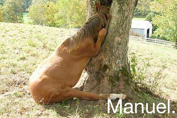 Manuel. - meme