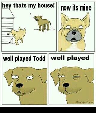 Damn you todd - meme
