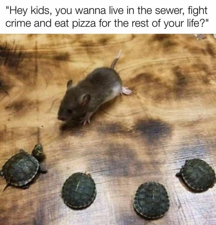 teenage mutant ninja turtles - meme