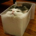 Hence proved, Cats are a form of liquid