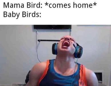traduscanlo flojos - meme