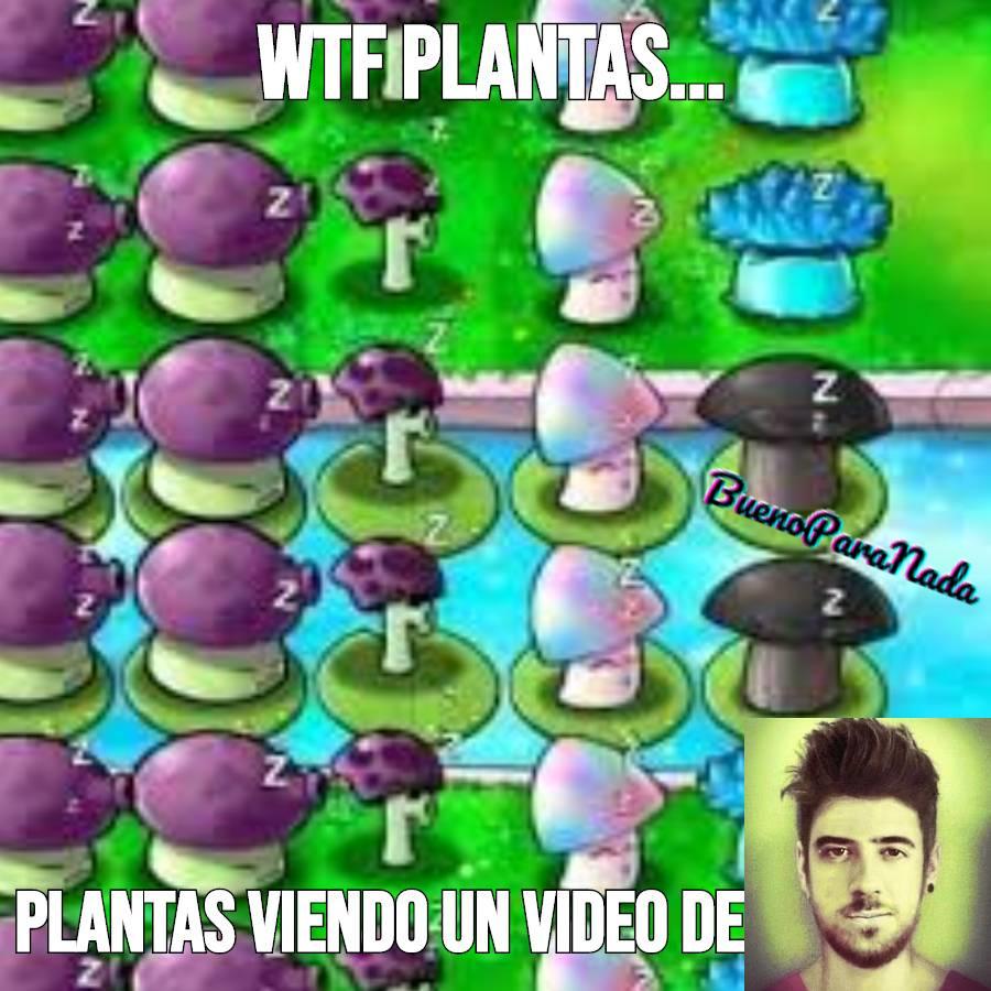LES DEBO LA CALIDAD DE LAS PLANTITAS - meme