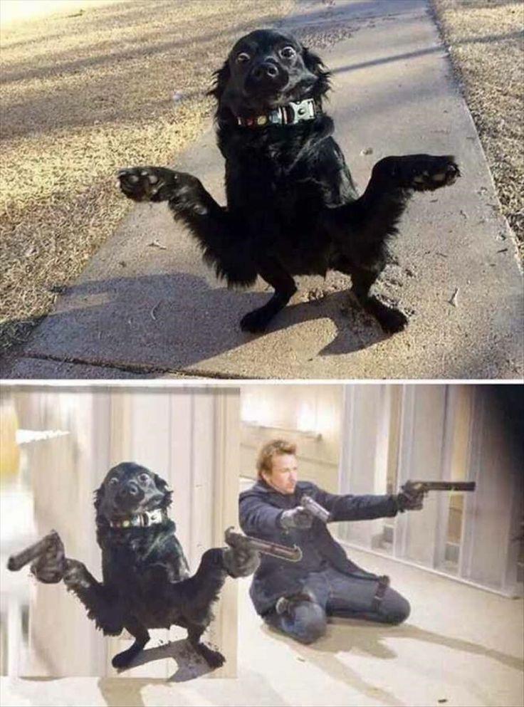Cachorro chegando na bala - meme