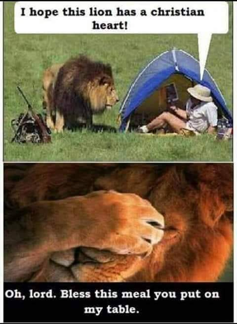 A very old one but still one of my favorites. Lion chow - meme