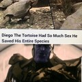 "Tortoise ""Action"""