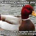Ahora hago memes del pato rojo