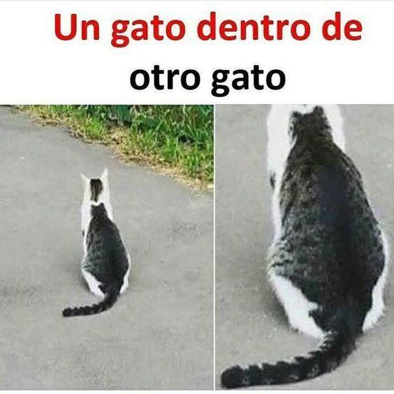 Otro gato, diría el chavo... - meme