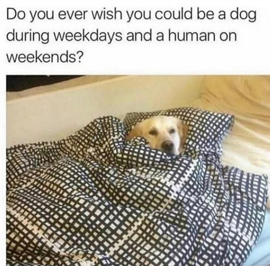 Tired doggo - meme