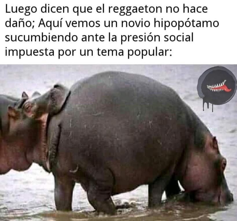 Quién dice que el reggaeton es malo? - meme