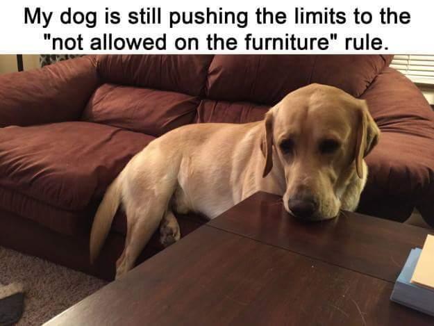 Rebel dogge - meme