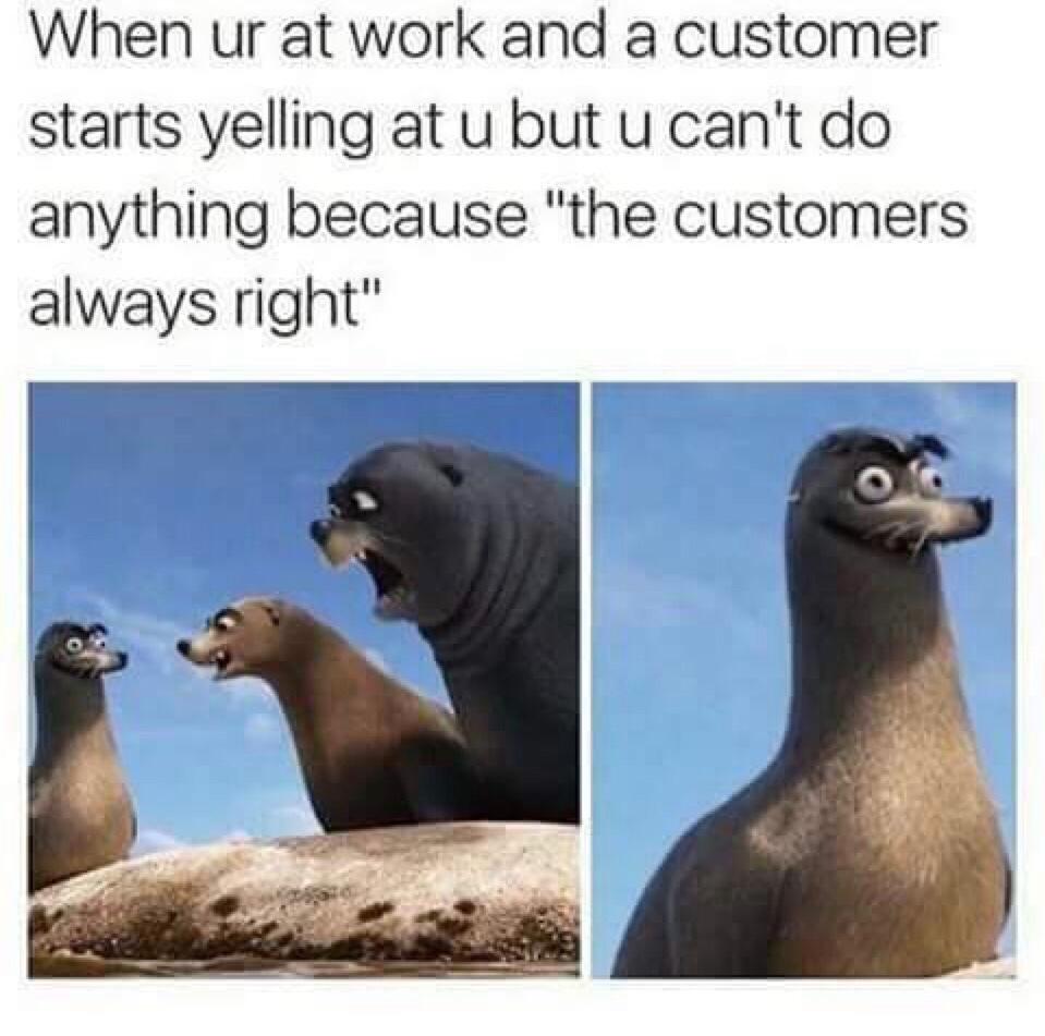 Seal - meme