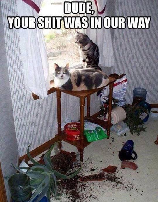 Darn cats - meme