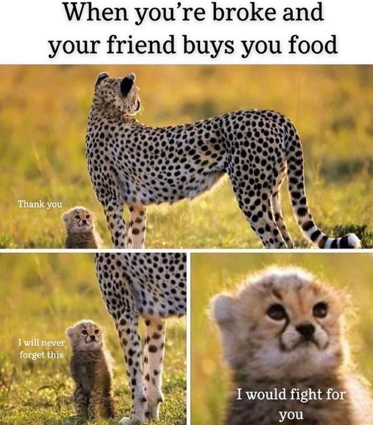 my best friend moved out of the country and I can no longer win his friendship with food - meme