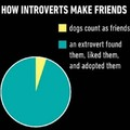 What about introvert dogs