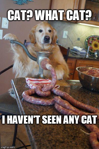When you spoil the cat. - meme