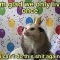 me too birthday possum
