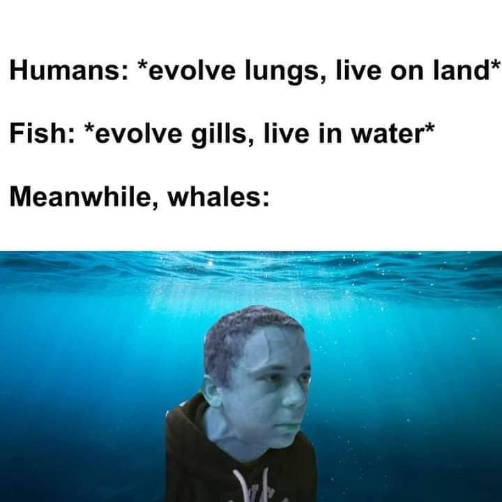Save the whales - meme