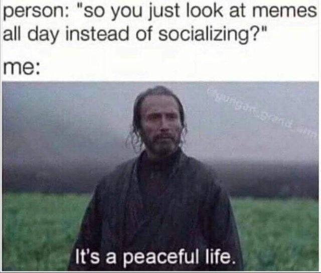 So you just look at memes all day instead of socializing?