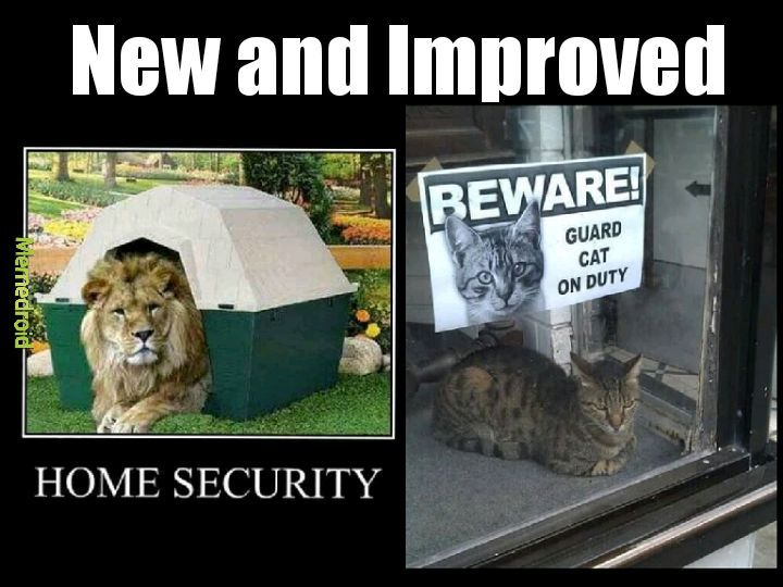 Cat and security - meme