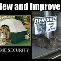 Cat and security