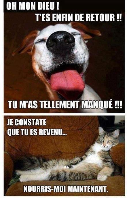 Vive les chats ! - meme