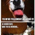 Vive les chats !