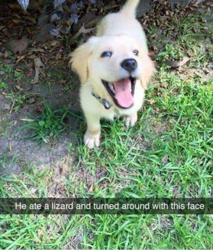 good pupper - meme